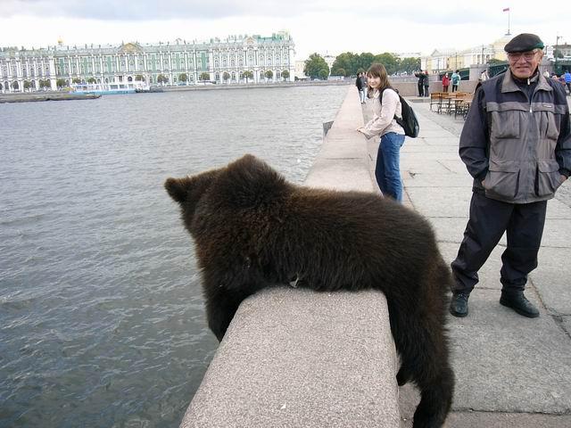 фото медведя на набережной Питера