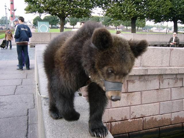медведь на стрелке Васильевского острова